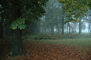 Bogard association des parcs et jardins de bretagne for Jardin neurodon 2015