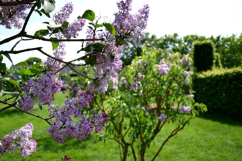 lilas_jardinsbroceliande_w.jpg