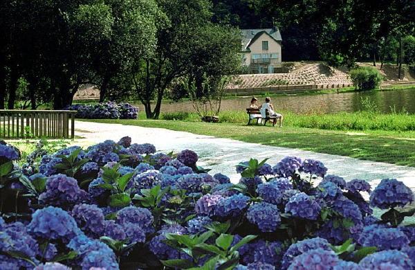 circuit des hortensias association des parcs et jardins de bretagne. Black Bedroom Furniture Sets. Home Design Ideas