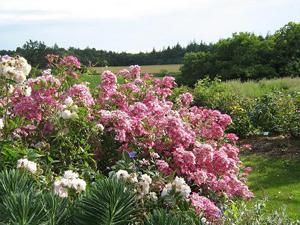 Jardins de keroguic association des parcs et jardins de for Jardin neurodon 2015