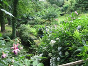 jardinscaradecg2.jpg